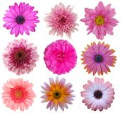 Nove flores da margarida Foto de Stock