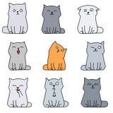 Nove gattini svegli Immagine Stock