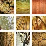 Nove imagens da madeira fotografia de stock