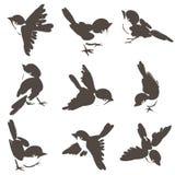 Nove pose del passero Fotografia Stock