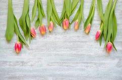 Nove tulipas amarelas vermelhas no fundo de madeira do vintage imagem de stock