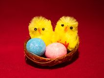 Novelty Easter Toy Chicks and nest. Two novelty Toy easter chicks with eggs in the nest with feathers and pink, blue and yellow eggs Stock Photos