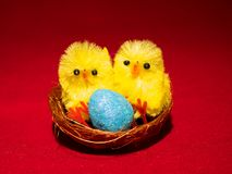 Novelty Easter Toy Chicks and nest. Two novelty Toy easter chicks with eggs in the nest with feathers and pink, blue and yellow eggs Stock Photography