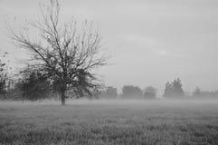 November& x27; alberi di s Immagini Stock Libere da Diritti
