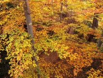 November Autumnal Forest Royalty Free Stock Images