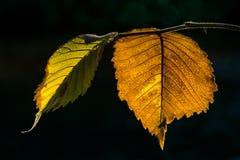 November-Blätter stockfoto