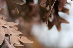 November-Blätter Stockbild