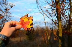 November-bladeren Stock Foto's