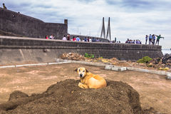 15 november, 2014: Blinde hond in een tempel in Mumbai, India Royalty-vrije Stock Foto