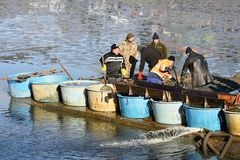 11 November 2017 brno Czech Republic. Traditional autumn catch of ponds. Czech pre-Christmas tradition. 11 November 2017 brno Czech Republic. Traditional autumn Royalty Free Stock Photo