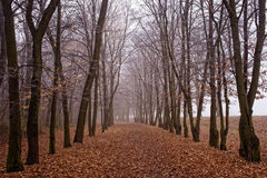 November fog in park Stock Image