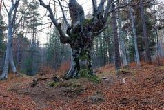 November forest Stock Photo