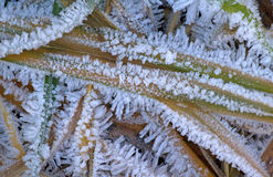 November Frost Stock Images