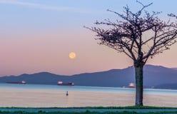 The November full moon morning Royalty Free Stock Photos
