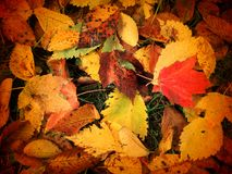 November höstliga sidor Royaltyfria Foton