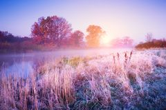 November landscape. Autumn morning with colorful trees and hoarfrost on the ground. Fall dawn royalty free stock image
