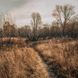 November landscape Royalty Free Stock Photo