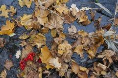 November leaves Stock Images