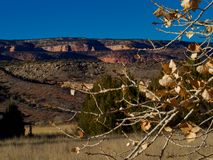 November Leaves and Red Cliffs. Cottonwood tree and blue sky. Horsethief Canyon State Wildlife Area in western Colorado has views, migratory birds, and diverse stock image