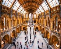 27 November 2017, London, England, nationellt historiskt museum Främre sikt av ett valskelett, del av valutställningen i royaltyfri bild