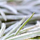 November-Morgenfrost auf Anlagen Lizenzfreie Stockbilder