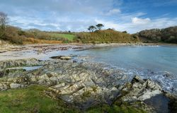 November morgon, Polridmouth liten vik, Gribbin huvud, Cornwall arkivbild