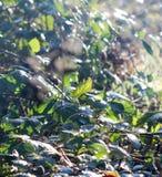 November morgonfrost på växter Royaltyfri Fotografi
