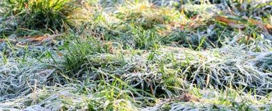 November morgonfrost på växter Royaltyfri Bild