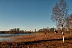 November morning. At lake Annsjon in Ostergotland, Sweden Stock Photo