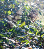November morning frost on a plants Royalty Free Stock Photography