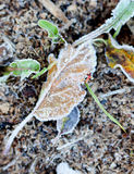 November morning frost on a plants Stock Images