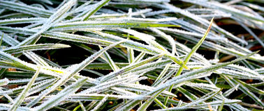November morning frost on a plants Royalty Free Stock Image