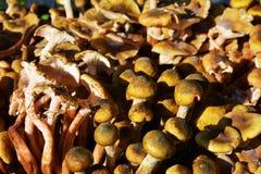 November mushrooms background stock photo