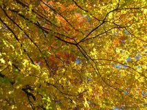 November Orange and Yellow Autumn Leaves stock photography