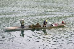 November 2018, People collecting weed plants Son river boat, Phong Nha, Vietnam stock image