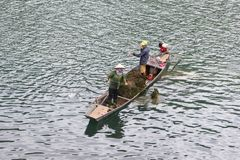 November 2018, People harvesting weed plants Son river boat, Phong Nha, Vietnam stock photography
