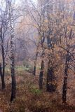 November rain in Russian forest Royalty Free Stock Photography