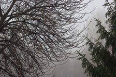 November regn Fotografering för Bildbyråer