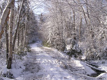 November snow falls. In Quebec forest stock image