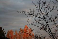 November-Sonnenuntergang lizenzfreies stockbild
