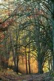 November Sunset Forest Stock Images