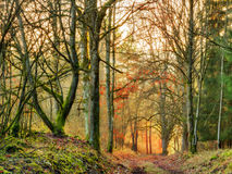 November Sunset Forest Royalty Free Stock Photos