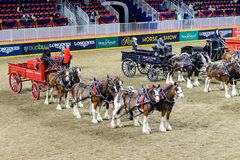 Royal Horse Show in Toronto stock photography
