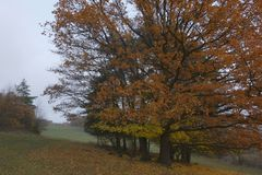 November weather. Gloomy November weather with trees, Czech Republic royalty free stock photography