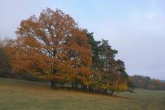 November weather. Gloomy November weather with trees, Czech Republic stock photo