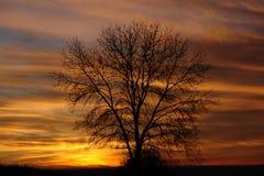 Novemberred Image libre de droits