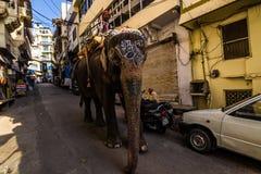 7 novembre 2014 : Éléphant dans la vieille ville d'Udaipur, Inde Photographie stock libre de droits