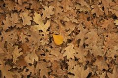 novembre Photos libres de droits