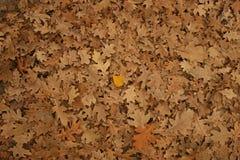 novembre Image stock