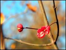 novembre Image libre de droits